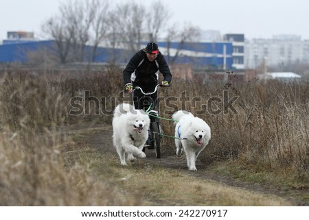 Kharkov, UKRAINE - November 15, 2014: Oleg Kostyuk during Two Dogs Scootering Men's 3100 m at Sled dogs dry land race Autumn Cup  2014 - stock photo