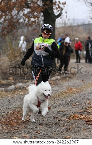 Kharkov, UKRAINE - November 15, 2014: Tatiana Yurchenko at canicross heats during Women's 3100 m at Sled dogs dry land race Autumn Cup - 2014 - stock photo