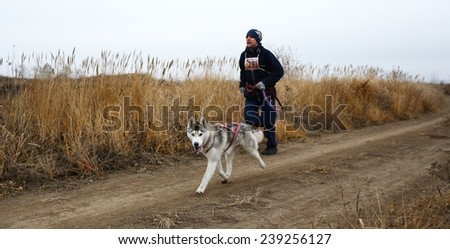 Kharkov, UKRAINE  November 15, 2014: Vladimir Golovin at canicross heats during Men's 3100 m at Sled dogs dry land race Autumn Cup - 2014 - stock photo