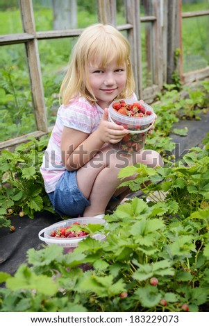 Kid girl with strawberry on seedbed - stock photo