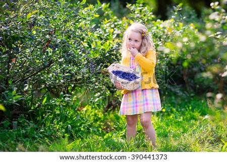 Kids picking fresh berries on blueberry field. Children pick blue berry on organic farm. Little girl playing outdoors in fruit orchard. Toddler farming. Preschooler gardening. Summer family fun. - stock photo