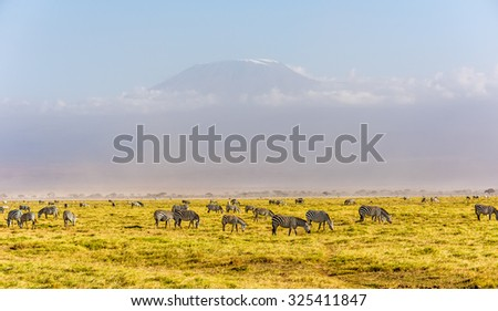 Kilimanjaro with snow cap and zebras seen from Amboseli National Park in Kenya. - stock photo