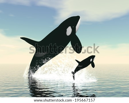 Killer whale mum and baby jumping upon ocean water by day - stock photo