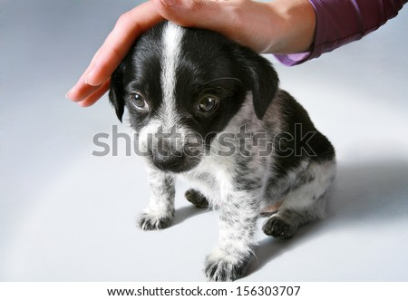 Kindness will save the world / studio photography of stroking the little puppy - on background  - stock photo
