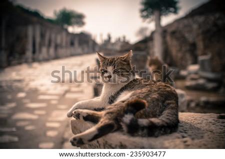 King cat of Ephesus - stock photo