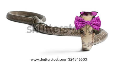 king cobra wearing glasses and a bow tie in front of a white background - stock photo