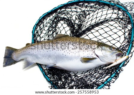 King Salmon - stock photo