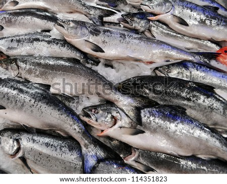 King Salmon on ice - stock photo