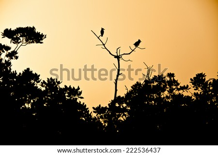Kingfishers silhouette in the sunset - stock photo