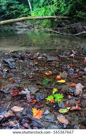 Kinnikinnick Creek flows through dense forests of northern Illinois - stock photo