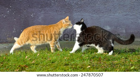 kiss cats, spring - stock photo