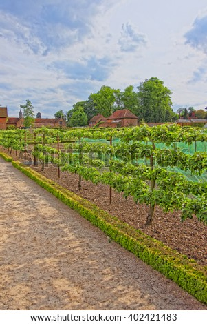 Kitchen garden in Audley End House in Essex in the United Kingdom. It is a medieval county house. Now it is under protection of the English Heritage. - stock photo