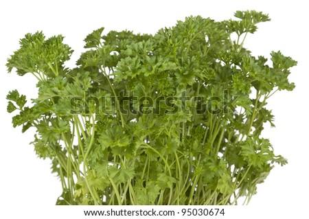 kitchen herb parsley  on white background - stock photo