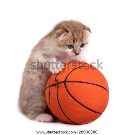 Kitten and a basketball ball - stock photo