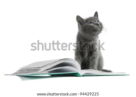 kitten and a book - stock photo