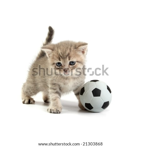 Kitten and a football on a white background - stock photo