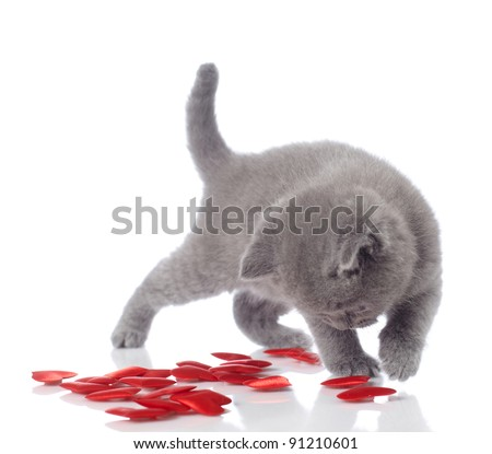 kitten and decorative hearts - stock photo