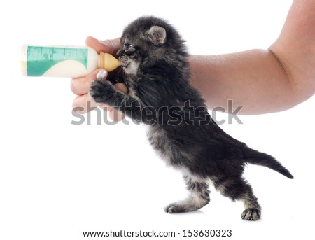 kitten and milk bottle in front of white background - stock photo