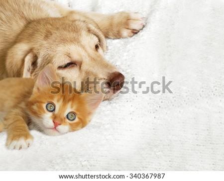 kitten and puppy - stock photo