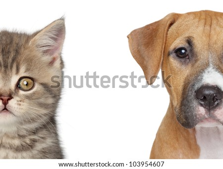 Kitten and puppy. Half of muzzle close up portrait on a white background - stock photo