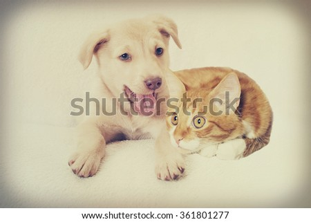 kitten and puppy, instagram - stock photo