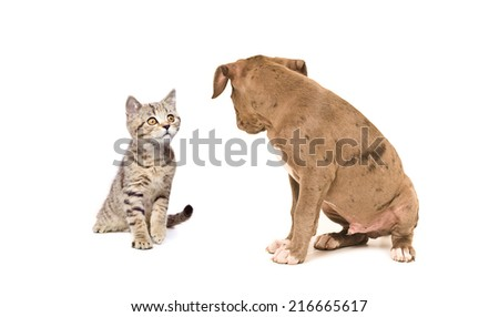 Kitten and puppy looking at each other - stock photo