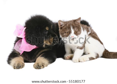 Kitten and puppy on a white background. - stock photo