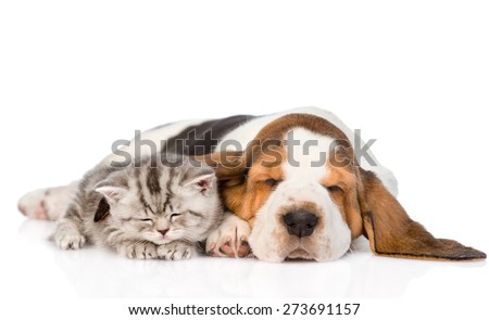 Kitten and puppy sleeping together. isolated on white background - stock photo