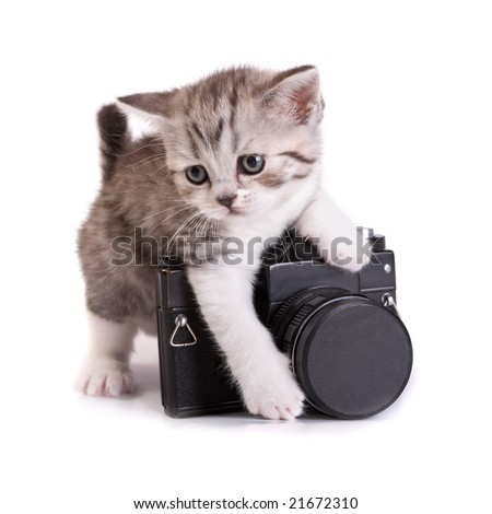 Kitten and the camera on a white background - stock photo