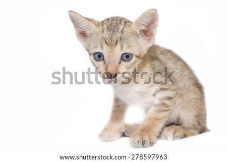 Kitten and yarn on white background. - stock photo