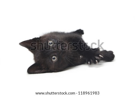 kitten being lazy isolated on white background - stock photo