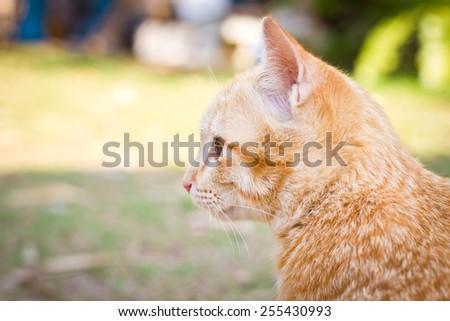 Kitten cat on green natural background. - stock photo