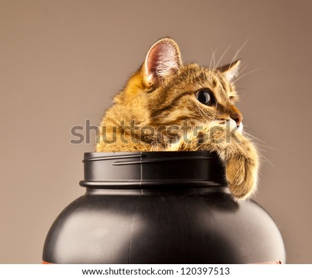 Kitten climbing out of a vase - stock photo