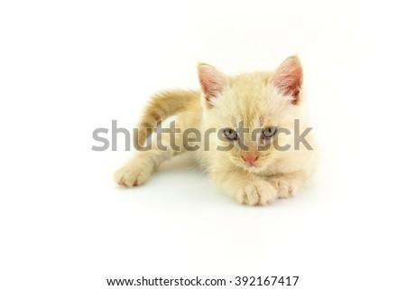 kitten cute playful on white background - stock photo