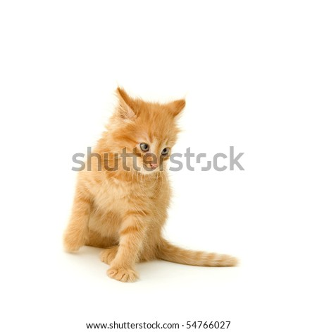 kitten cute red attack isolated on white background - stock photo