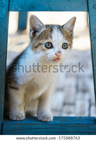 Kitten hiding under a blue chair - stock photo