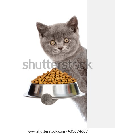 Kitten holding bowl of dry cat food and peeking from behind empty board. isolated on white background - stock photo