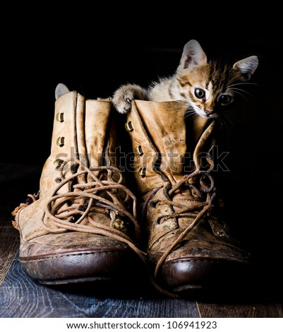 Kitten in a boot on a black background. - stock photo