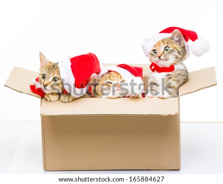 Kitten in a box - stock photo