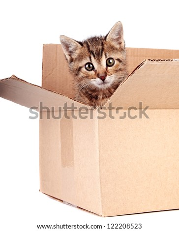 Kitten in a box on a white background - stock photo