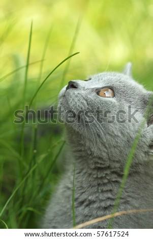Kitten in a garden - stock photo