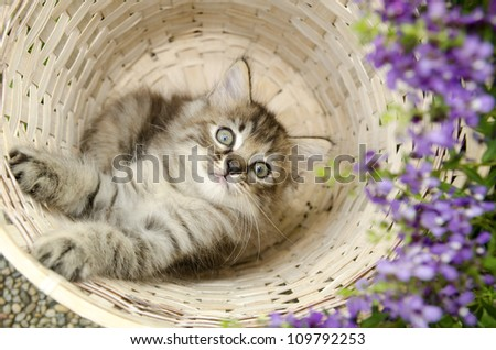 kitten in basket - stock photo