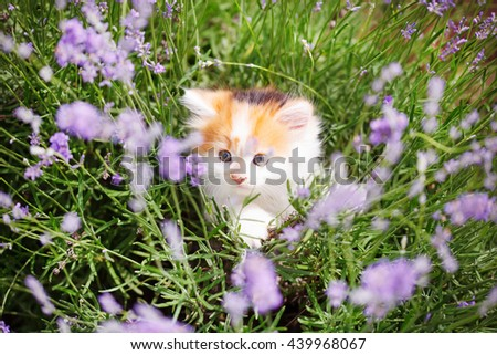 Kitten in colorful flowers - stock photo