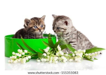 kitten in green gift box isolated on white. - stock photo