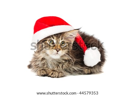 kitten in red hat against white background - stock photo