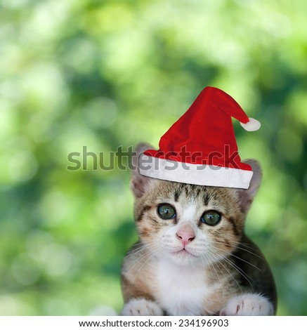 Kitten in Santa Claus xmas red hat on green bokeh background. - stock photo