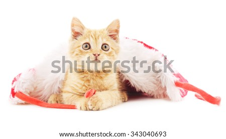 Kitten in the Christmas hat  isolated on a white background. - stock photo