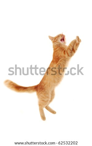 kitten jumping isolated on white background - stock photo
