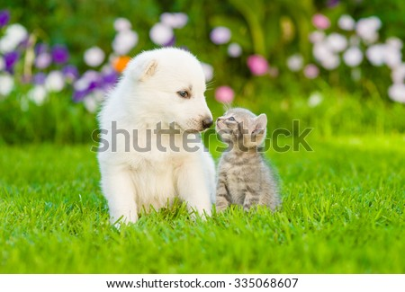 Kitten kissing White Swiss Shepherd`s puppy on green grass - stock photo
