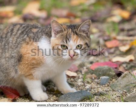 Kitten Looking At Camera - stock photo
